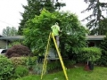 Tree-Pruning-on-ladder