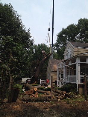 Tree preservation services play a big part with building around trees