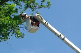 arborist in bucket to provide tree pruning service