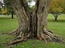 Split Tree Cabling