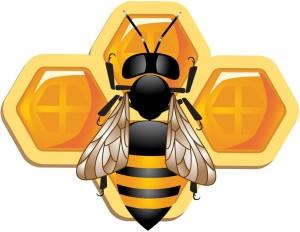The decline of the honeybee
