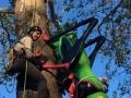 Kristian-installing-Tree-Art