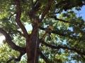 Recreational-Tree-Climbing