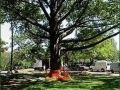 tree-preservation