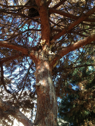 tree disease treatment can reduce or eliminate these types of tree diseases