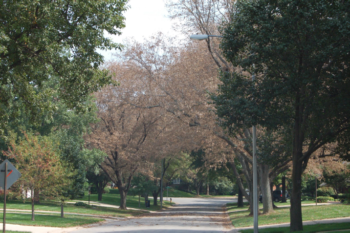 tree insect treatment is important for maintaining healthy trees