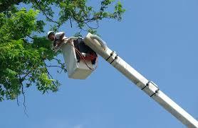 arborist in bucket to provide tree pruning service